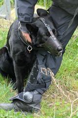 Rechte Kundgebung - Motto Michel, wach endlich auf, ein Polizeihund mit Maulkorb wird von seinem Polizisten gestreichelt.