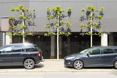 Fotos aus dem Hamburger Stadtteil Borgfelde - Bezirk Hamburg Mitte. Spalierbäume / Straßenbegrünung an einem Gewerbegebäude in der Ackelmannstraße; davor parkende Autos.