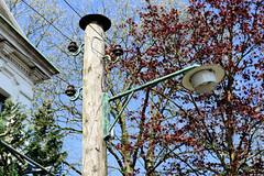 Fotos aus der Gemeinde Bönnigstedt - Kreis Pinneberg - Metropolregion Hamburg. Alter Holzmast mit Telefondrähten und historischer Straßenlaterne / Straßenbeleuchtung in der Bönningstedter Kieler Straße.