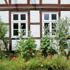 Fotos von Lübeln,  Ortsteil der Gemeinde Küsten; Landkreis Lüchow-Dannenberg - Metropolregion Hamburg; Fachwerk und blühender Mohn - Lübelner Mühle.