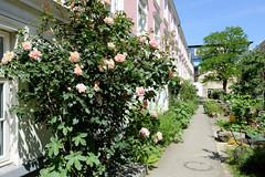 Bilder aus dem Hamburger Stadtteil Hoheluft Ost - Bezirk Hamburg Nord. Wohnhäuser / Falkenriedterrassen mit blühenden Rosen / Garten; errichtet 1891 für kinderreiche Arbeiterfamilien.