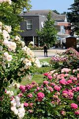 Bilder vom Rosarium in Uetersen - im sieben Hektar großen Rosenpark sind  mehr als 30.000 Rosen und 830 verschiedene Rosensorten angepflanzt.