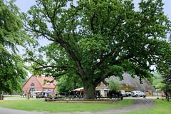 Bilder von  Küsten,  Gemeinde im Landkreis Lüchow-Dannenberg - Metropolregion Hamburg. Dorfplatz vom historischen Runddorf mit alter Eiche.