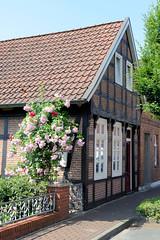 Bilder von der historischen Hansestadt Fürstenau im Landkreis Osnabrück - Bundesland Niedersachsen; Fachwerkgebäude mit blühenden Rosenstrauch an der Schwedenstraße.
