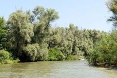 Fotos vom Biosphärenreservat Donaudelta bei Murighiol in Rumänien.