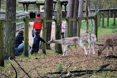Fotos vom Forst Klövensteen im Hamburger Stadtteil Rissen; BesucherInnen am Zaun zum Wildgehege mit Damwild.