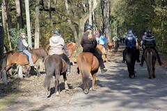 Fotos vom Forst Klövensteen im Hamburger Stadtteil Rissen; ReiterInnen auf ihren Pferden beim Ausritt am Sandmoorweg.