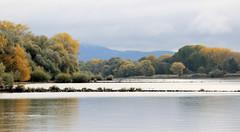 Herbstbäume am Ufer der Donau bei Stephanposching in Niederbayern