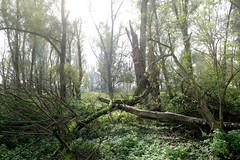 Bilder vom Vollhöfner Wald in Hamburg Finkenwerder.