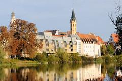 Die Stadt Lauingen , Donau liegt im Landkreis Dillingen im Donautal in Bayern. Blick über die Donau,herbstlich gefärbte Bäume stehen am Donauufer, moderne Wohnhäuser, dahinter der Schimmelturm und der Kirchturm der Spitalkirche St. Alban.