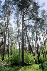 Techentiner Wald am Gewerbegebiet Stüdekoppel in Ludwigslust.
