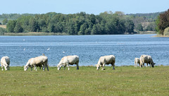 Glave ist ein Ortsteil der Gemeinde Dobbin-Linstow im Landkreis Rostock in Mecklenburg-Vorpommern.