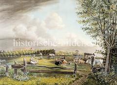 Ländliche Idylle um 1800 in Hamburg Eimsbüttel - Weide mit Kühen am Schäferkamp.
