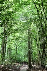 Die Buchenwälder der Serrahner Berge sind seit Juni 2011 zusammen mit vier weiteren deutschen Buchenwäldern UNESCO-Weltnaturerbe.