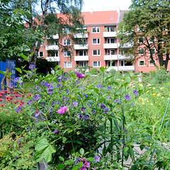 Fotos aus dem Hamburger Stadtteil Horn - Bezirk Hamburg Mitte. Stadtteilgarten Horner Paradies - Urban gardening, Gärtnern für Alle - Nutzgarten.