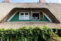 Fotos aus dem Hamburger Stadtteil Reitbrook, Bezirk Bergedorf. Reetdachgebäude am Vorderdeich - Dachgaube.