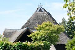 Neuengamme  ist ein Hamburger Stadtteil im Elbmarsch-Gebiet der Vierlande im Bezirk Bergedorf. Reet gedeckte Dächer einr Hofanlage - Giebelschmuck mit Pferdeköpfen.