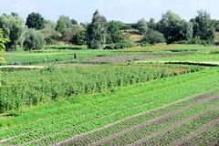 Fotos aus dem Hamburger Stadtteil   Allermöhe, Bezirk Hamburg Bergedorf. Felder mit Blumen und Gemüse am Allermöher Deich.