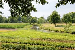 Curslack ist ein Stadtteil  im Bezirk Hamburg Bergedorf. Curslack ist einer der vier Stadtteile, die zusammen die Hamburger Vierlande bilden. Blumenfelder / Maisfeld am Ufer der Dove-Elbe.
