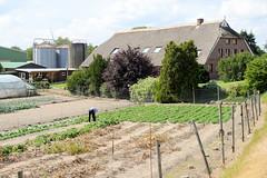 Fotos aus dem Hamburger Stadtteil Ochensenwerder, Bezirk Bergedorf. Landwirtschaftliches Wohngebäude mit Silos und Gemüsegarten am Ochsenwerder Norderdeich.