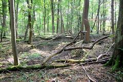 Der Nationalpark Hainich  ist 1997 gegründet worden - seit 2011 zählt  zum UNESCO-Weltnaturerbe Buchenurwälder.