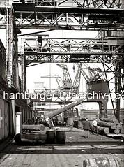 Abladen von tropische Baumstämme im Hamburger Hafen; ca. 1938.