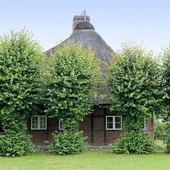 Fotos aus dem Hamburger Stadtteil Neugraben-Fischbek, Bezirk Hamburg Harburg. Historische Kate, errichtet Ende des 18. Jh. - das hinter Kopflinden versteckte Wohnhaus steht unter Denkmalschutz.