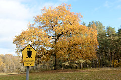 Alt Schwerin ist eine Gemeinde im Landkreis Mecklenburgische Seenplatte in Mecklenburg-Vorpommern.