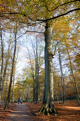 Der Ivenacker Tiergarten  war ursprünglich der Schlosspark vom Ivenacker Schloss im Landkreis Mecklenburgische Seenplatte in Mecklenburg-Vorpommern.