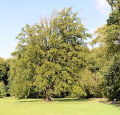 Fotos vom Schlosspark  von Ludwigslust in Mecklenburg-Vorpommern.