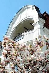 Stadtvilla an der Alster - blühender Magnolienbaum im Vorgarten.