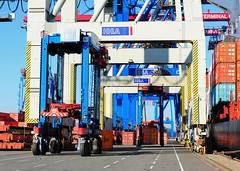 Arbeit im Hafen Hamburg - Containertransport unter den Containerbrücken.