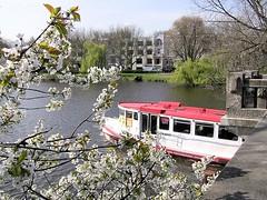 Fahrgastschiff der weissen Alsterflotte fährt in die Aussenalster ein. Im Hintergrund Wohnhäuser an der Bellevue - eine der Prachtstrassen Hamburg Winterhudes.