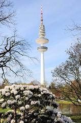 Rhododendronblüten im Hamburger Park - Heinrich Hertz Turm, Fersehturm. Bilder aus der Grünanlage im Zentrum der Hamburger City - Planten un Blomen.
