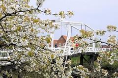 Historische Zugbrücke über die Luehe bei Steinkirchen. Blühende Kirschbäume an der Lühe - Zugbrücke über den Fluss im alten Land.