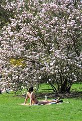 Im Hamburger Stadtpark steht ein Tulpenbaum in voller Blüte - eine Parkbesucherin sonnt sich im Bikini auf einer Decke.