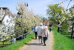 Spaziergänger auf dem Deich zur Obstblüte im Alten Land. Die Wohnhäuser sind durch die Deiche vor Hochwasser geschützt.