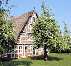 Frühlingsidylle im Alten Land, dem Hamburger Obstanbaugebiet.