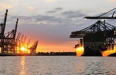 Abendstimmung im Hafen Hamburg - Sonnenuntergang am Burchardkai.
