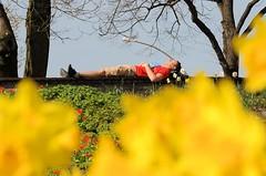 Ein Parkbesucher hat sich auf der Parkbank in de Sonne ausgestreckt. Im Vordergrund blühen die gelben Narzissen.