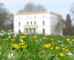 Frühlingswiese im Hamburger Jenischpark.