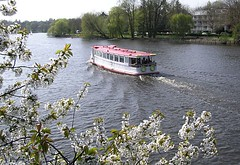 Alsterdampfer am Langen Zug - am Ufer ein blühender Kirschbaum.