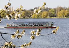 Alsterschiffe der Weissen Flotte in Hamburg; das Solarschiff Alstersonne auf der Aussenalster.