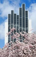 Moderne Hotelarchitektur am Hamburger Dammtor - blühende Zierkirsche.