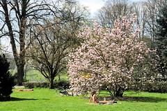 Parkbesucher_innen sonnenbaden auf einer Liegewiese im Hamburger Stadtpark.