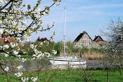 Kirschblüte im Alten Land - Bauernhäuser am Ufer der Lühe. Segelboot unter Motor auf der Lühe - blühende Bäume und Fachwerkhäuser am Flussufer.