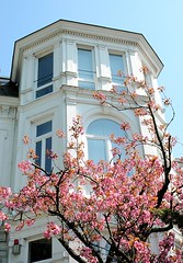 Historische weisse Villa - japanische Zierkirsche im Vorgarten.