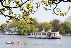 Kastanienbaum mit Blattknospen am Ufer der Aussenalster. Ein Alsterdampfer überquert die Alster - ein Kajak fährt in der Frühlingssonne auf dem Wasser des grossen Hamburger Sees.