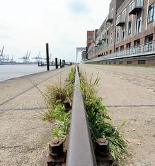 Altonaer Hafen - Schienen des Hafenkrans an der Großen Elbstraße. Wildkraut wächst am Gleis.