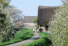 Familienausflug zur Obstblüte ins Alte Land.